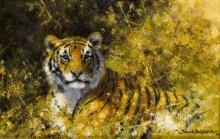 Тигр в тени - Шеперд, Девид (20 век)