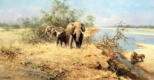 Слоны в кустах, долина Луангва - Шеперд, Девид (20 век)