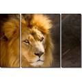 Портрет льва - Сток