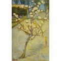 Грушевое дерево в цвету - Гог, Винсент ван