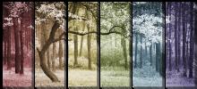 Дерево в переливах цвета