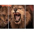 Ревущий лев - Сток