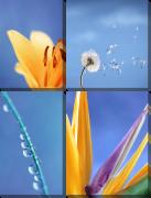 Цветы на синем
