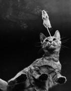 Игра в кошки-мышки - Эхо