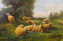 Овцы на лугу - Бонёр, Роза