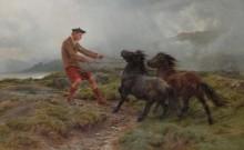 Гилли и два шетландских пони - Бонёр, Роза