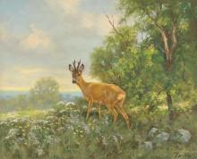 Молодой олень на лугу - Дихтль, Эрих