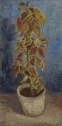 Колеус в цветочном горшке (Coleus Plant in a Flowerpot), 1886 - Гог, Винсент ван