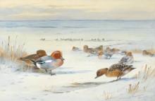 Дикие утки на снегу - Торберн, Арчибальд
