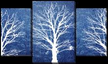 Силуэты дерева