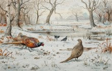 Фазаны и камышницы на снегу - Доннер, Карл (20 век)
