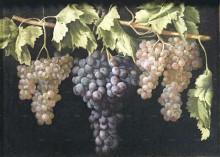Виноград, 1782 - Фернандес, Хуан