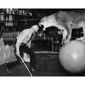 Дрессировщик со львицей