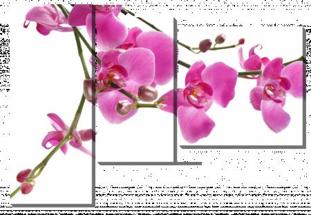 Ветка орхидеи_2