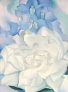 Белая роза и живокость - О'Кифф, Джорджия