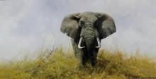 Слон в степи - Шеперд, Девид (20 век)