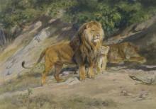 Блительный лев - Бонёр, Роза