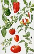 Помидоры и другие овощи - Райс, Элизабет