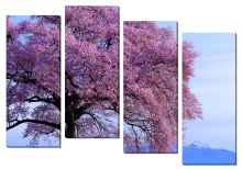 Дерево в розовом цвету_2