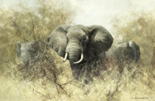 Слоны в терновых кустах - Шеперд, Девид (20 век)