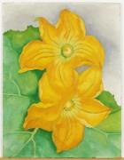 Цветки цуккини - О'Кифф, Джорджия