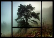 Дерево в тумане_2