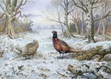 Пара фазанов - Доннер, Карл (20 век)