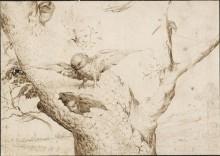 Гнездо сов - Босх, Иероним (Ерун Антонисон ван Акен)