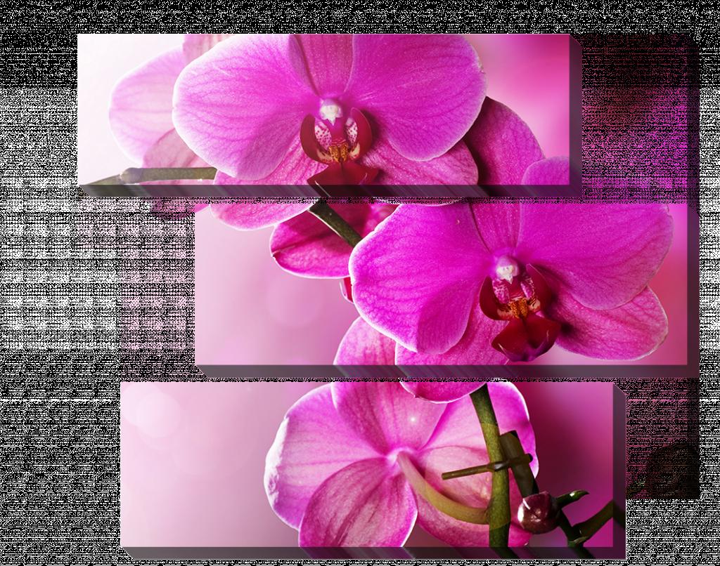 Орхидеи в розовом _2