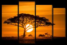 Закат у дерева