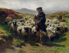 Горец пастух - Бонёр, Роза