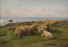 Овцы у моря - Бонёр, Роза