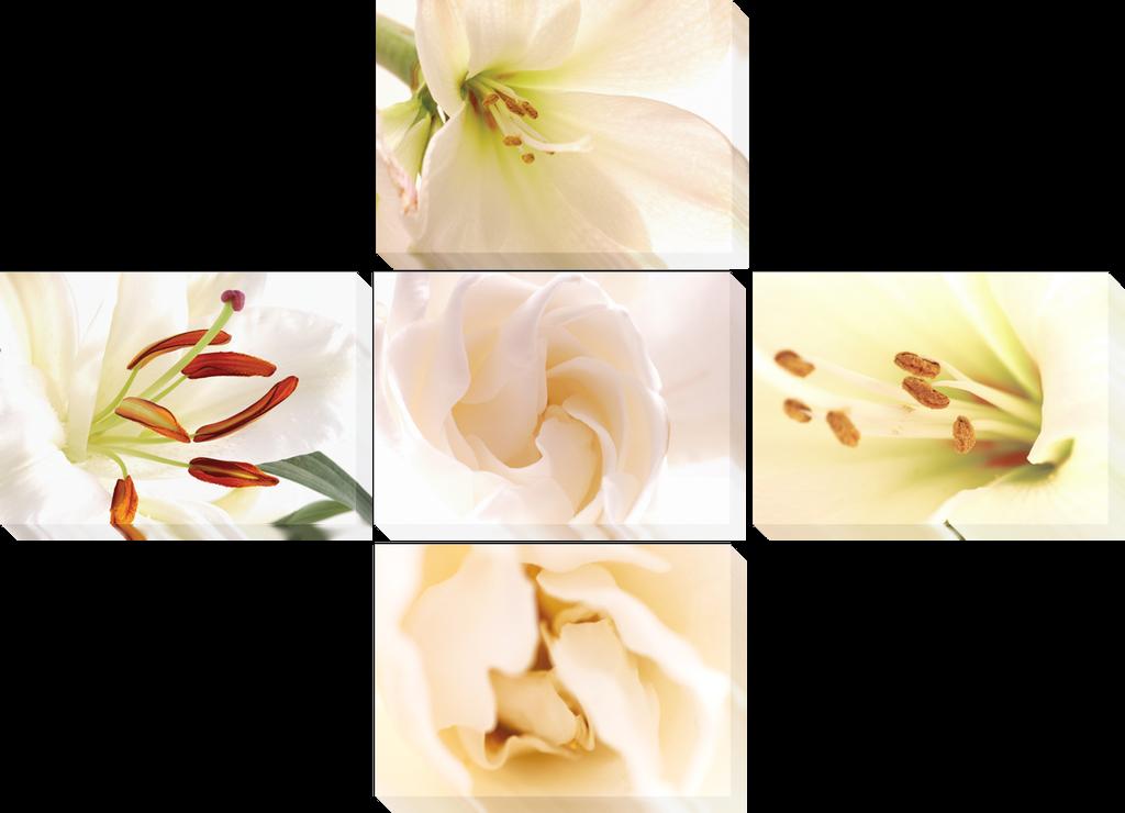 Белые цветы 2