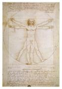 Витрувианский человек - Винчи, Леонардо да