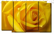 Желтая роза_2
