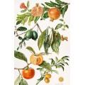 Гранаты и другие фрукты - Райс, Элизабет
