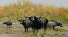 Азиатские буйволы - Шеперд, Девид (20 век)