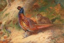 Пара фазанов - Торберн, Арчибальд