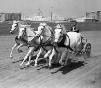 Чарлтон Хестон на колеснице