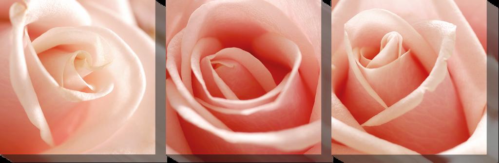 Розы_2