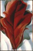 Большой темно-красный листок на белом фоне - О'Кифф, Джорджия