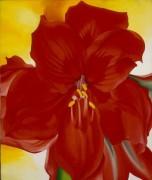 Красный амариллис - О'Кифф, Джорджия