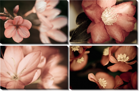 Цветы макро 2