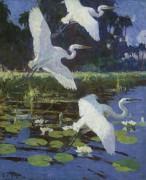 Цапли и лилии, 1934 - Бенсон, Фрэнк Уэстон