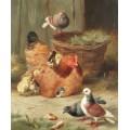 Курица породы Род-айланд и три голубя - Хант, Эдгар