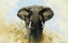 Бычий слон - Шеперд, Девид (20 век)