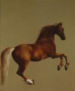 Скаковая лошадь Маркиза Rockingham - Стаббс, Джордж