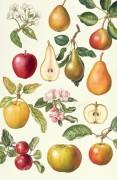Яблоки и груши - Райс, Элизабет
