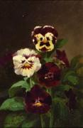 Цветочные картины - Уильямсон, Джон
