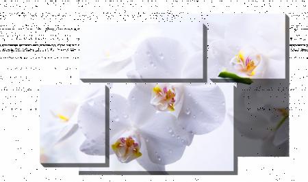 Белые орхидеи_2